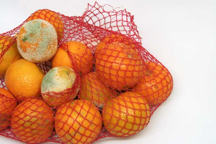 mesh bag of moldy oranges