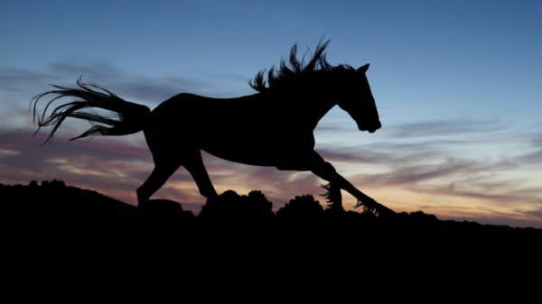 silhouette of a stallion running at dusk | Is your business structured like a stallion?